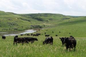 pasture shot